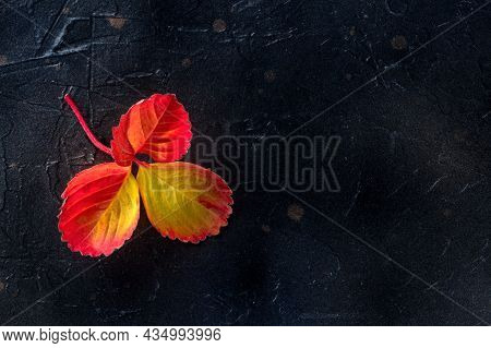 Autumn Leaf On A Black Background, Fall Season Poster With Copy Space