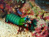 The surprising underwater world of Philippine sea, island Mindoro, color cancer poster