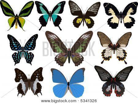 Ten Tropical Butterflies