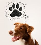 Cute brown and white border collie thinking about a paw in a thought bubble above his head poster