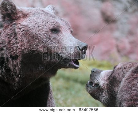 Cute Bears While Playing Merrily