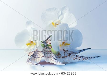 Orchid Flowers On A Seashell In Blue Tones