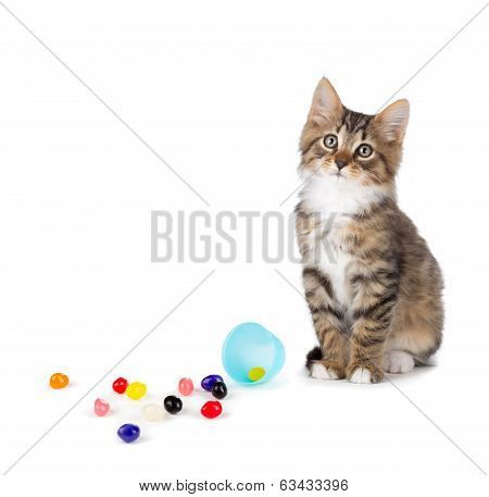 Cute Tabby Kitten Sitting Next To Spilled Jelly Beans On A White Background.