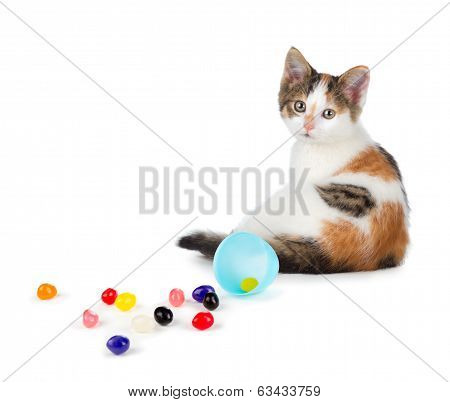 Cute Calico Kitten Sitting Next To Spilled Jelly Beans On A White Background.