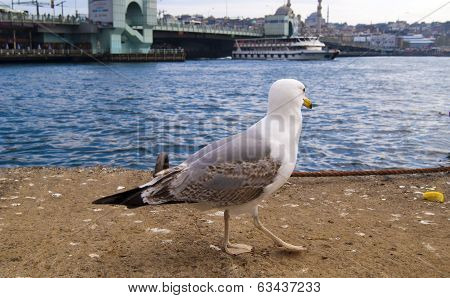 seagull's  in the background  views of istanbul,galata bridge, eminonu district poster