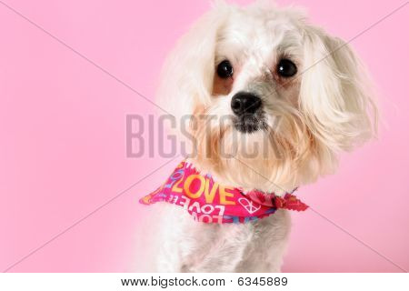shot of a pretty pup on pink poster