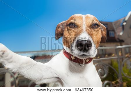 dog taking a selfie with a smartphone poster