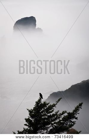 Hawk On A Tree Over The Foggy Water