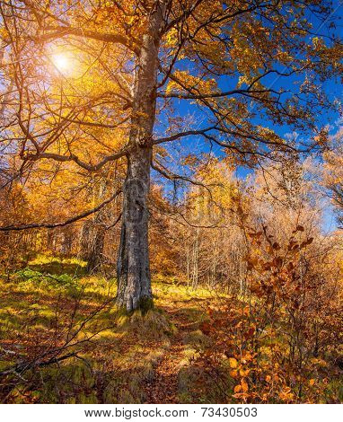 Majestic particolored forest with sunny beams. Natural park. Dramatic unusual scene. Red autumn leaves. Carpathians, Ukraine, Europe. Beauty world.