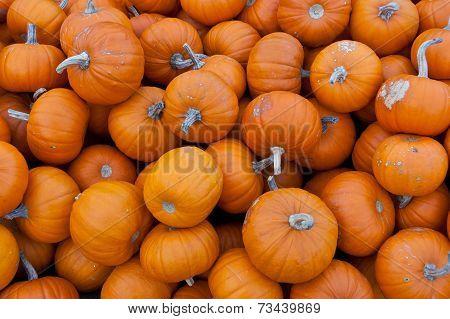 Bunch Of Small Orange Pumpkins