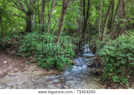 Small river in the woods