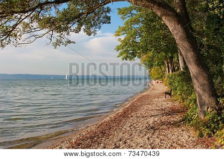 idyllic autumnal starnberg lake shore. beach with shrubs and trees and resting bench poster