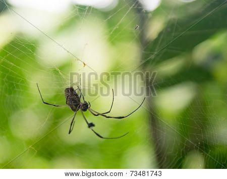 Spider In Its Spiderweb