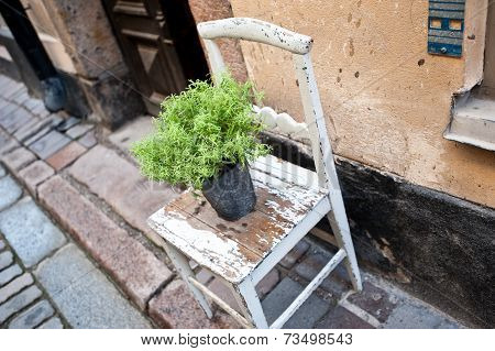 A flower pot on an old chair on a street