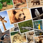 Collection of wild animals photography poster