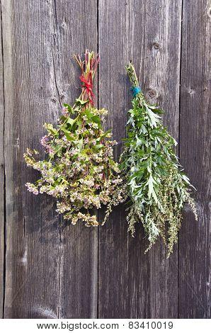 buckwheat and medical plant mugwort Artemisia vulgaris bunch on old wooden farm wall poster