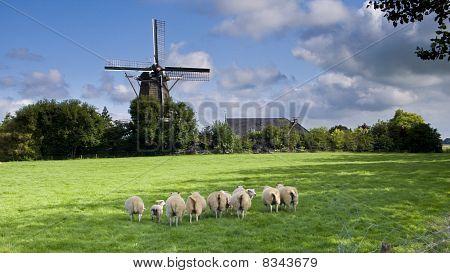 Wind Mill In Netherlands
