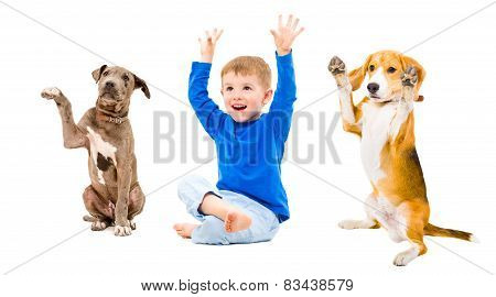 Cheerful boy and two dogs sitting together with hands raised