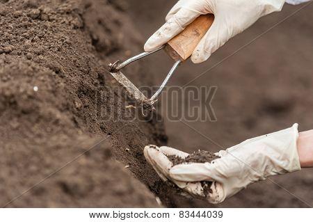 Technician woman hands holding soil