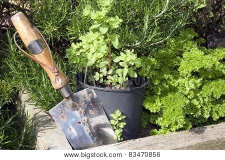 Stainless Steel Garden Trowel