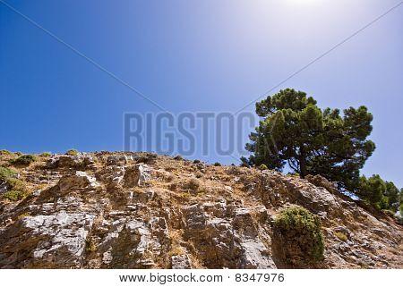 Baum und Felsen