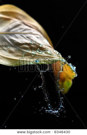Rainwater Splashing Leaf