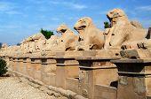 Avenue of ram-headed sphinxes in Precinct of Amun-Re  (Karnak Temple Complex, Luxor, Egypt) poster