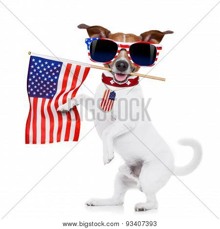dog 4th of july