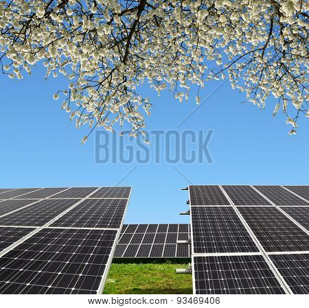 Solar energy panels with flowering branch tree