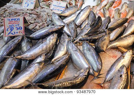 Small Tuna