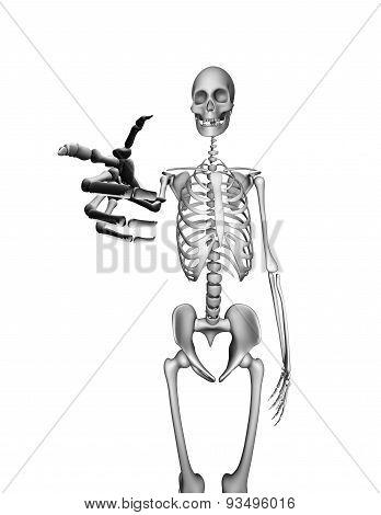 Skeleton Pointing.