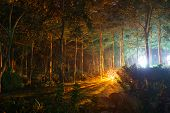 Park with mystical light at night poster