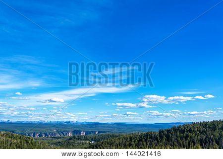 Dense Forest Covered Landscape