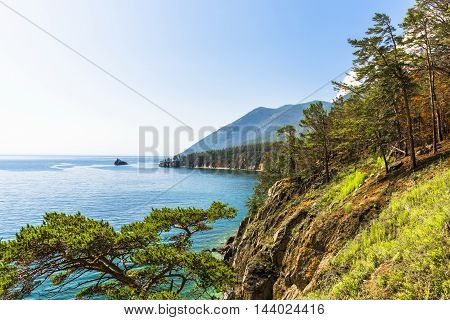 A dense pine forest, walks right up to the steep steep banks of lake Baikal.