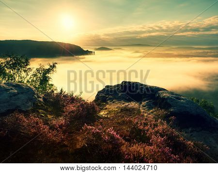 Pink Red Blooming Heather Bush On Cliff In Summer Morning. Dreamy Hilly Land