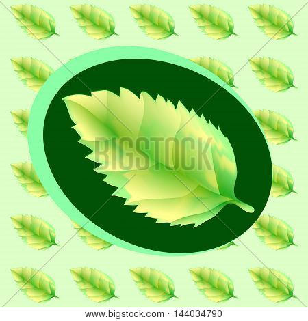 Green leaf of the tree. Leaf linden or apple for background or a logo or a pattern.