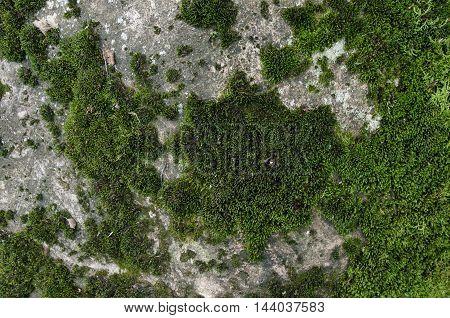 Mossy Stone Texture