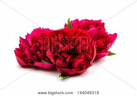 Flowers. Red bouquet piones isolated on white
