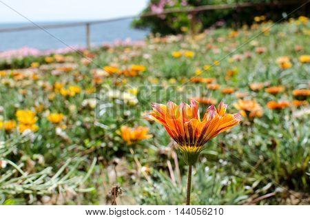 Field of flowers on sunny day near by ocean