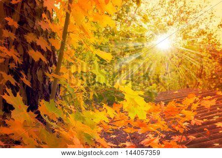 Autumn. Fall Scene. Forest In Sunlight Rays
