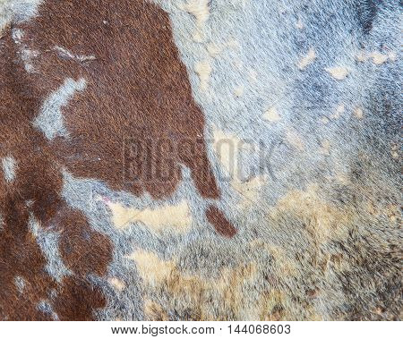 close up cow hide as texture background