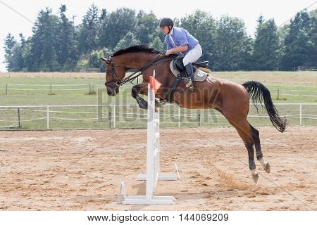 SVEBOHOV CZECH REPUBLIC - AUG 20: Side view of a brown horse long jump over a hurdle at