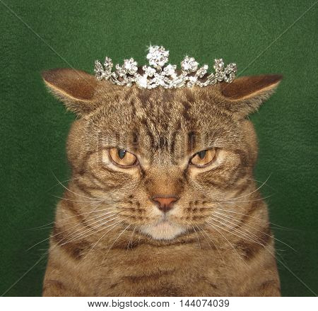 A cat with a crown on its head is looking like a real cat king.