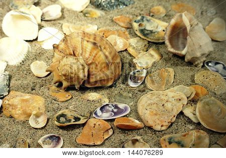 Ray of sunlight falling on left, illuminates large conch shell Rapana lying among small shells on sandy sea beach