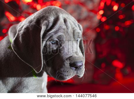Puppy that is all alone with a bright holiday looking background