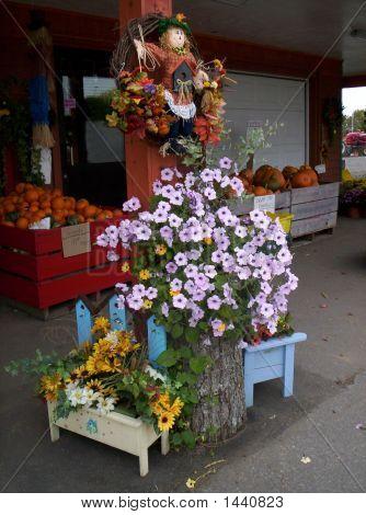 Trailing Petunia And Pumpkins