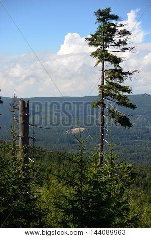 Gian Mountain Szrenica in Karkonosze National Park