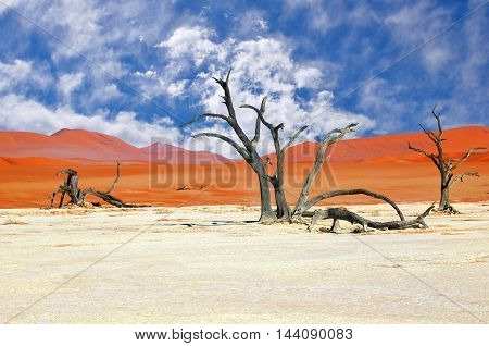 Dead Camelthorn Trees against red dunes and blue cloudy sky in Deadvlei Sossusvlei. Namib-Naukluft National Park Namibia Africa