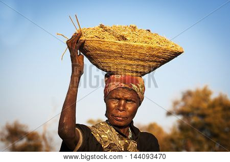 Caprivi Strip Namibia - August 20 2011: African woman balancing a basket with cereals in her head in the Caprivi Strip Namibia Africa