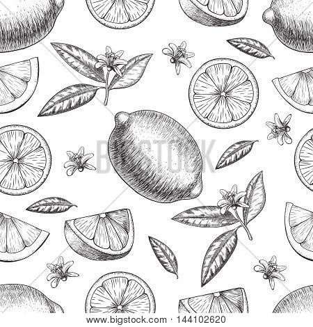 Seamless Vector hand drawn lime or lemon. Whole lemon, sliced pieces half, leave sketch. Fruit engraved style illustration. Retro vector illustration. Detailed citrus drawing. Great for water, detox drink, natural cosmetics